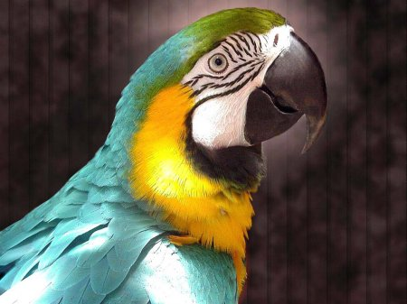 Уход за перьями попугаев
