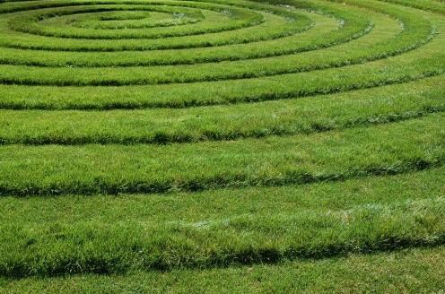 Виды трав для дизайна